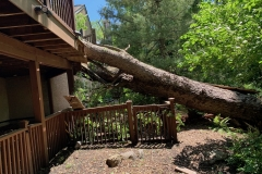 Emergency Tree Removal 1