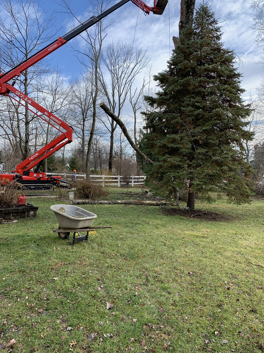 North Wales Tree Removal Willow Tree And Landscape Services