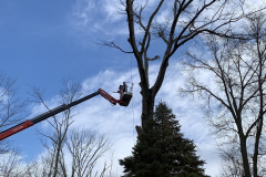 North Wales Tree Removal 2