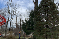North Wales Tree Removal 4