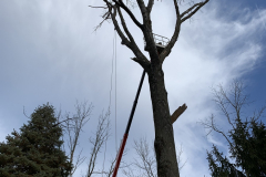 North Wales Tree Removal 6