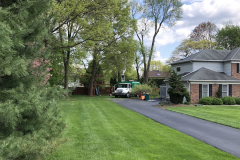 Tree Removal Near Me - Blue Bell Hollow Maple 1