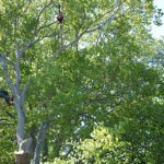 Tree Removal Bucks County