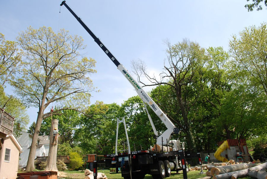 Hatboro Tree Service