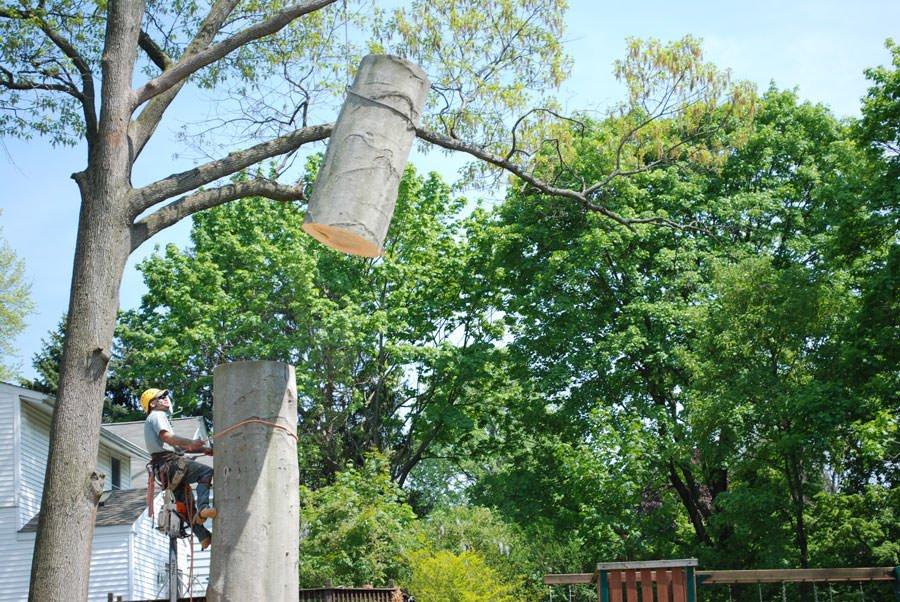 Jenkintown Tree Service
