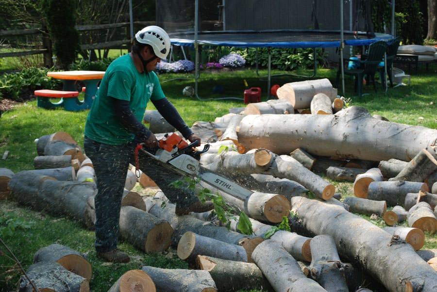 Rydal Tree Service