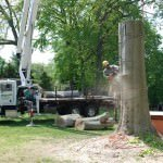 Tree Removal Philadelphia