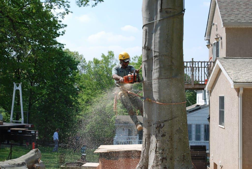Elkins Park Tree Service