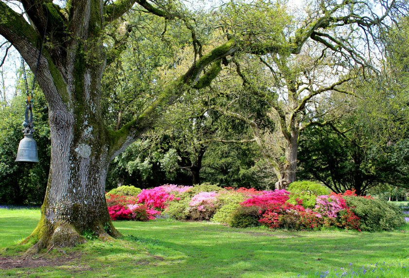 Tree and shrub insect and disease treatments - spring insect control