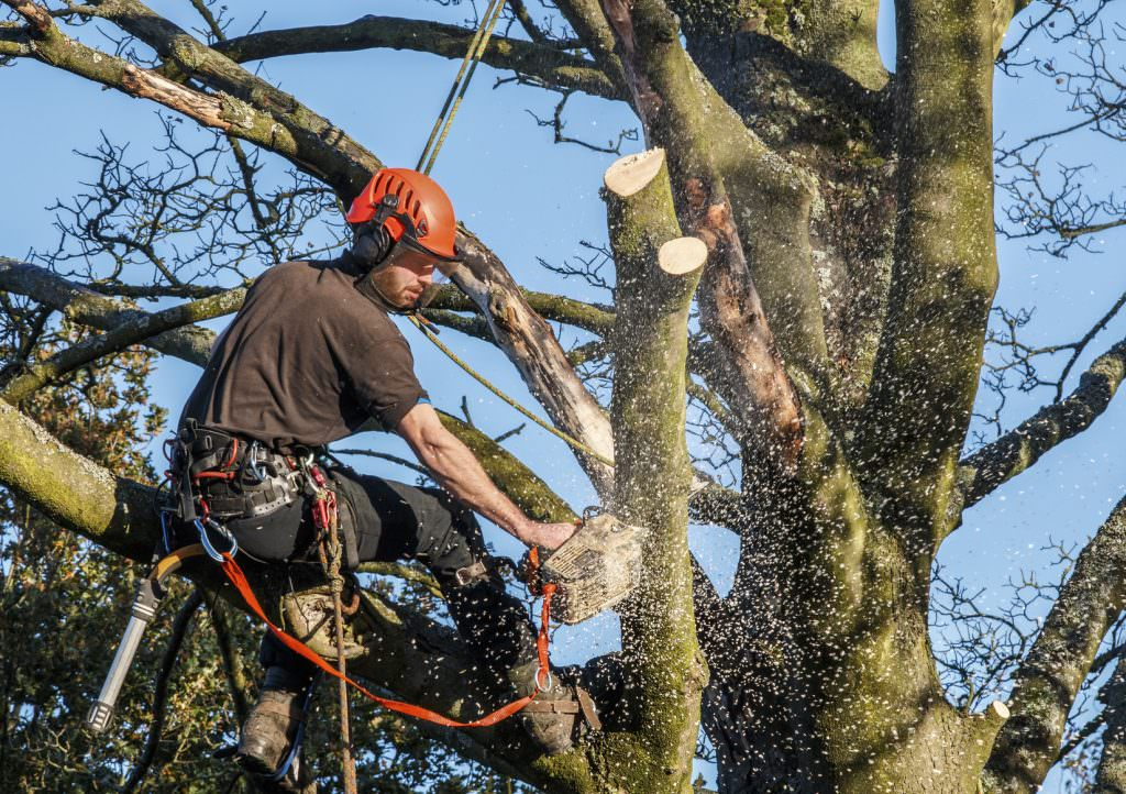 Tractor Man On Cutting Trees : How to protect trees from storm damage willow tree and
