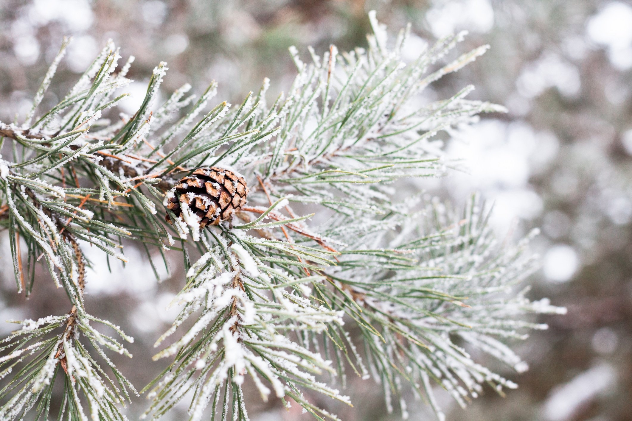 Winter Evergreen Protection in PA & NJ